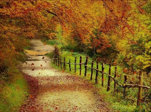 fall foliage (2)